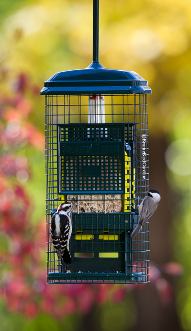 SquirrelBuster Suet feeder